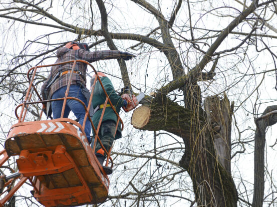 branch trimming services Mansfield ma