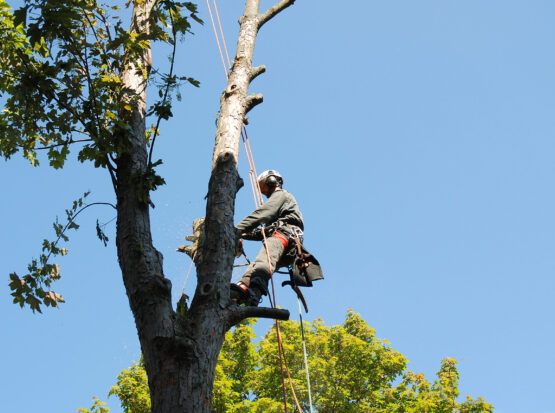 emergency tree service Mansfield ma