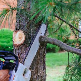 branch removal Mansfield