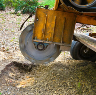 stump removal Mansfield