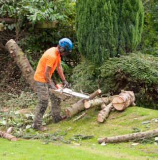 tree cutting Mansfield
