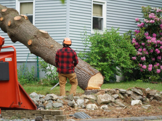 tree removal services Mansfield ma